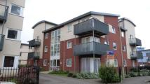 Apartment to rent in Longhorn Avenue,