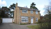 4 bedroom Detached home in Hillsborough Park