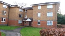 Masefield Flat to rent