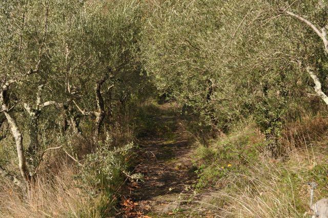 Path to pergola
