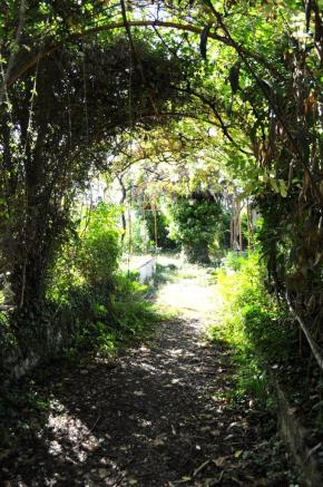 Vine covered paths