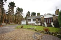 Detached Bungalow in Oakfield Bungalow...