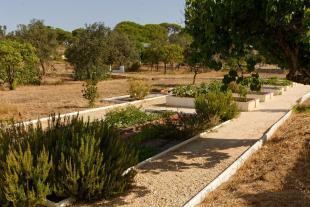 Herb & Veg Garden
