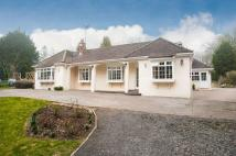 Equestrian Facility home for sale in Whipsnade, Bedfordshire