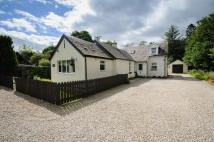 Cottage for sale in Hollybank, Blairbeg...