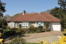 Detached Bungalow for sale in Halletts Shute, Yarmouth