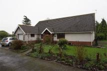 Detached Bungalow for sale in Pinegrove, Goldcliff...