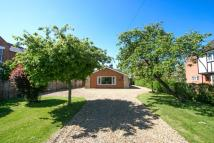 Detached Bungalow to rent in Norwich Road, Wymondham...