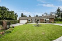3 bed Detached Bungalow in SOUTH CHEAM
