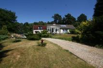 Storrington Detached Bungalow to rent