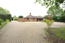 Bungalow for sale in Bicknacre, Chelmsford...