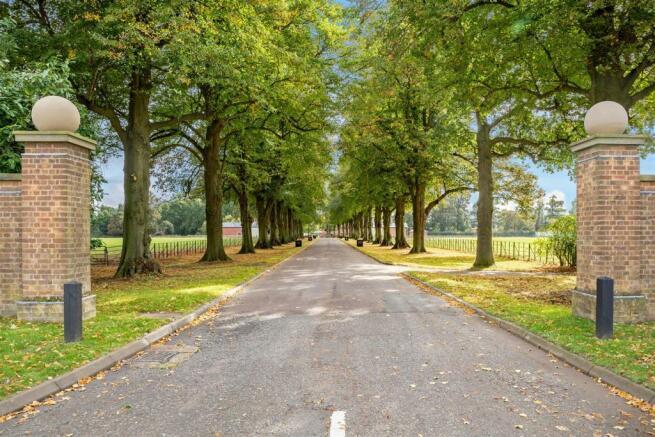 Tree Lined Avenue.jpg