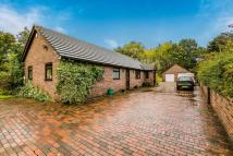 Bungalow for sale in Afoneitha Road, Penycae...