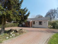 Detached Bungalow for sale in Cumming Road, Downham...