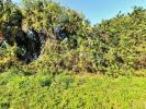 Florida Land for sale