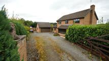 Detached property in Ffordd Llanfynydd, CH7