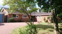 3 bed Detached Bungalow for sale in NORTH HOLMWOOD, DORKING