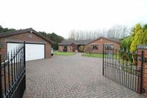 4 bedroom Detached Bungalow in Brenkley Court...