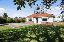 3 bed Bungalow for sale in Ipswich Road, Brantham...
