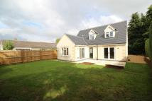 3 bedroom new home for sale in The Beeches, Langham
