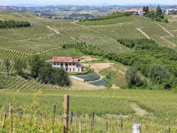 Vineyard location