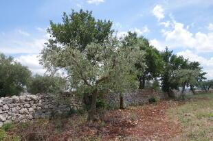 Well-kept stone wall