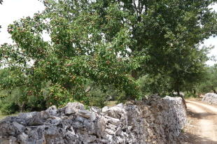 Lovely stone walls