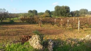 View to vines