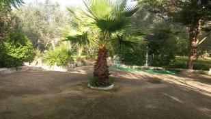 palm tree at front