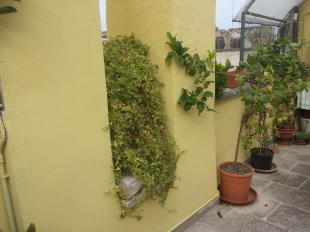 Roof terrace plants