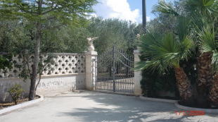 Gate to olive grove
