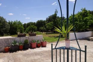Views to the garden