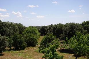 Views to garden
