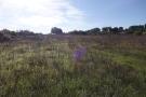 Lovely land