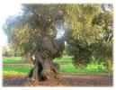 magnificient tree