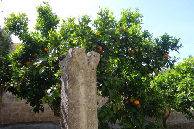 The citrus orchard