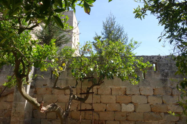 Fruit tree and wall
