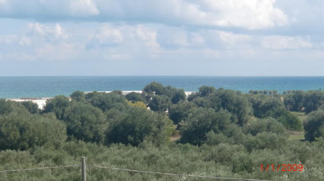 Sea views over trees