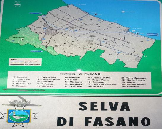 Selva map