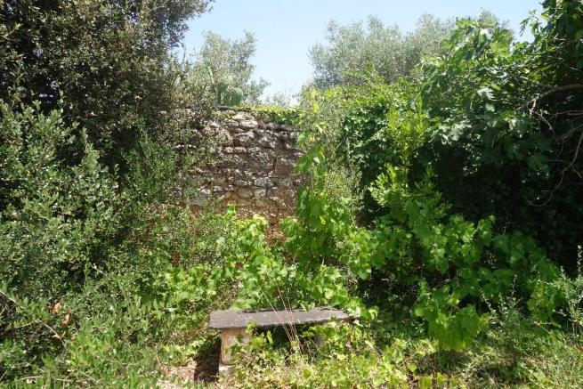 Courtyard vegetation