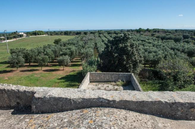 View olive grove