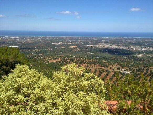 Selva valley views