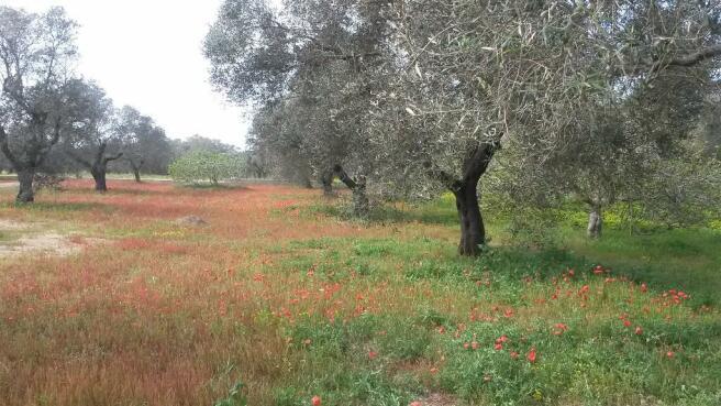 Spring in Salento