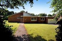 Detached Bungalow in Hill Cliffe Road...