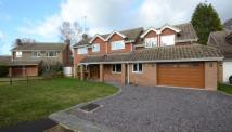 Detached house for sale in Hollytrees...