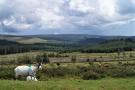 Dartmoor surround...