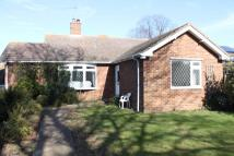 Detached Bungalow to rent in Mill Lane, Felixstowe...