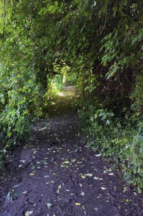 Pathway to Arpino