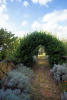 Arch to olive trees