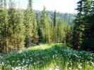 Montana property for sale